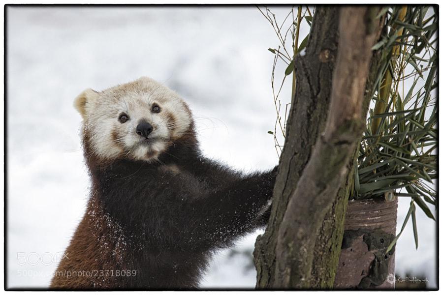 Photograph Hello !  by Kai Buddensiek on 500px