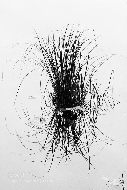Photograph Grass Clump by Matt H on 500px