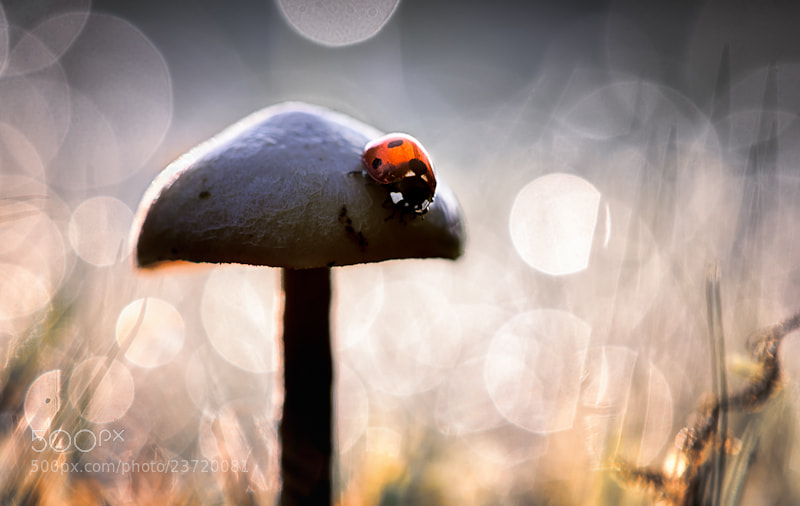 Photograph The Adventures Of The Black Mushroom * by BLOAS Meven on 500px