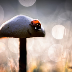 The Adventures Of The Black Mushroom * by BLOAS Meven (capuchon29)) on 500px.com