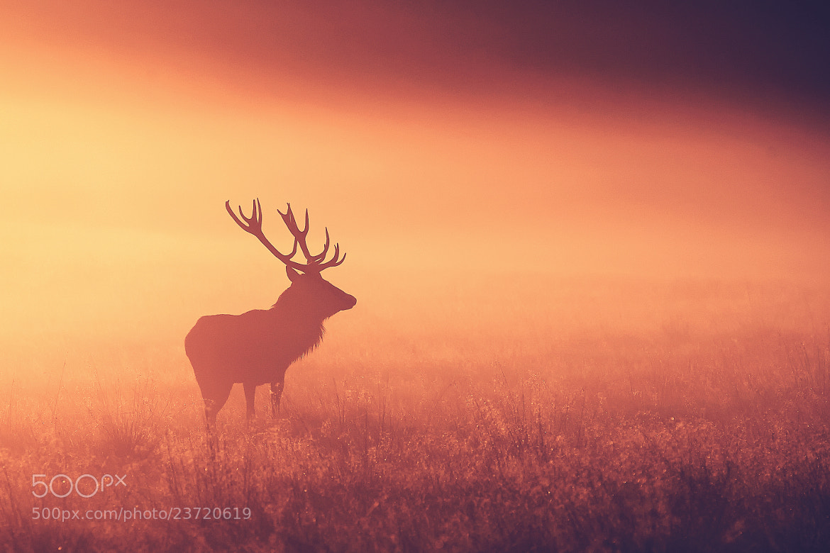 Photograph split tone stag by Mark Bridger on 500px