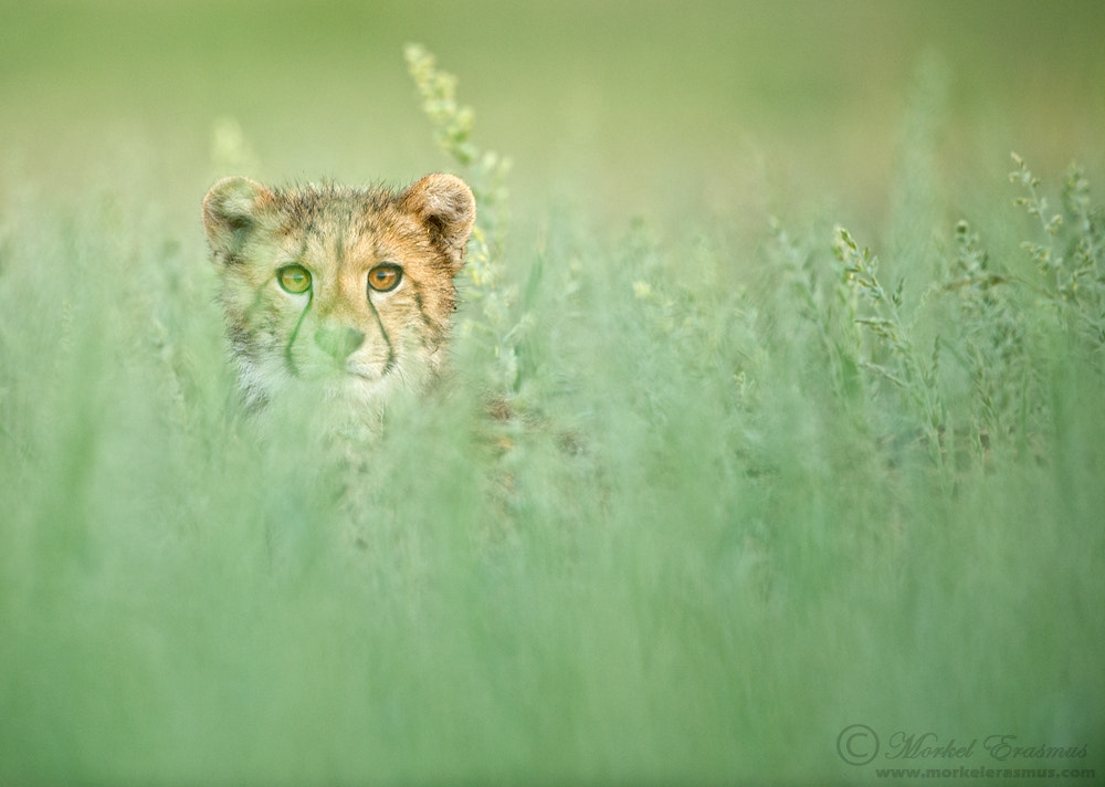 Photograph Here's looking at you by Morkel Erasmus on 500px