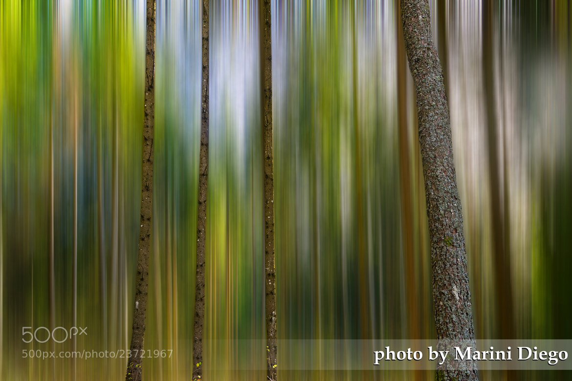 Photograph The forest by Diego Marini on 500px