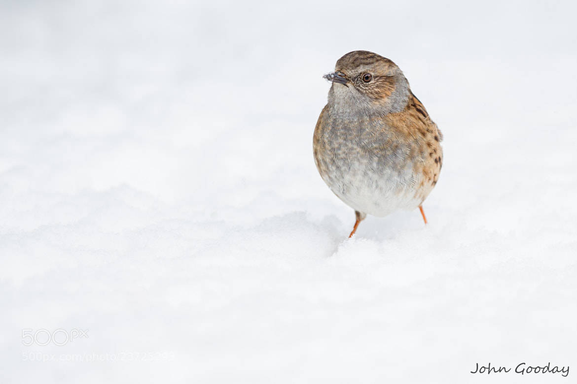Photograph Lost in the snow by John Gooday on 500px