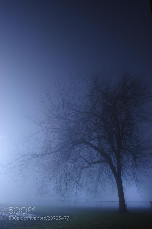 Photograph Evening Fog by Anna Krasnova on 500px