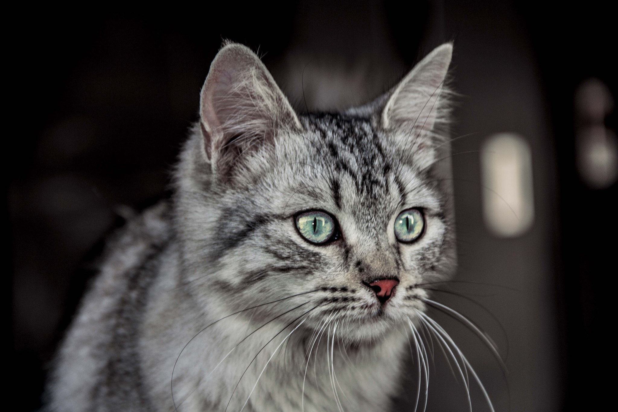 Photograph CAT by IBRAHIM GWI on 500px