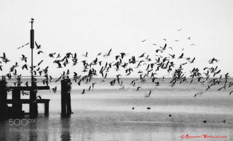 Photograph Seagulls by Giuseppe  Peppoloni on 500px