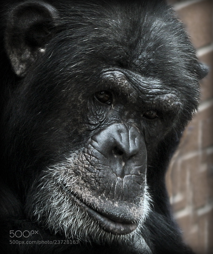 Photograph You looking at me? by Millerz on 500px