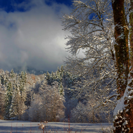 winterday II