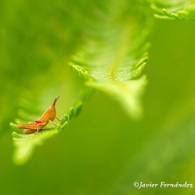 The small grasshopper by Javier Fernández Sánchez (JFS)) on 500px.com