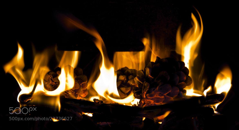 Photograph Fire by Miguel Parreño Martinez on 500px