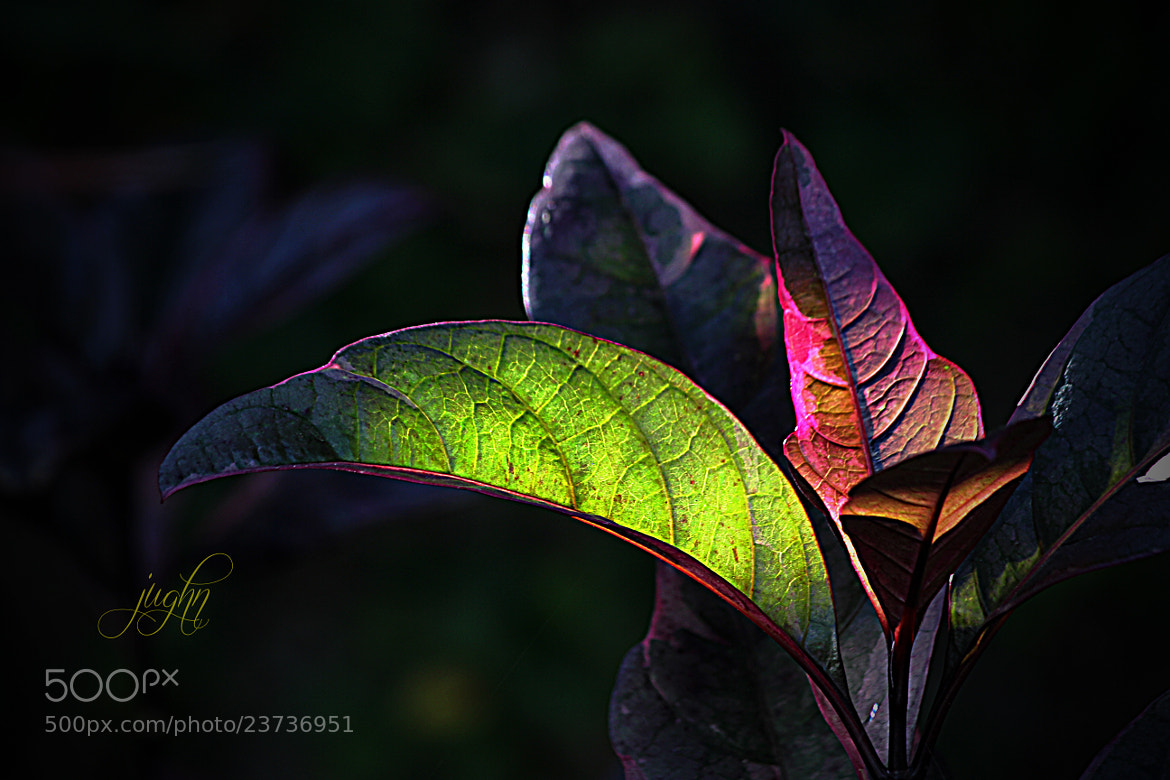 Photograph Glowing Leaves by jughnguevarra on 500px