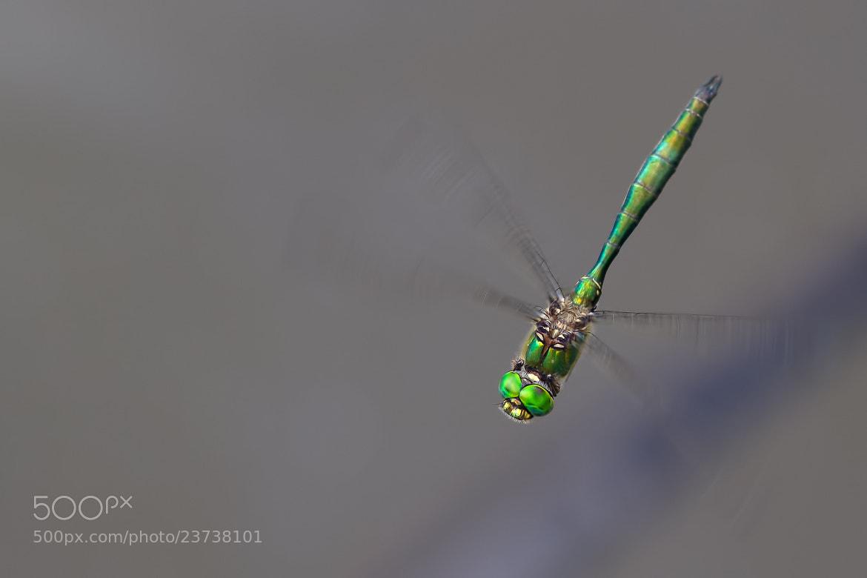 Photograph Flying Emerald I. by Martin Černý on 500px