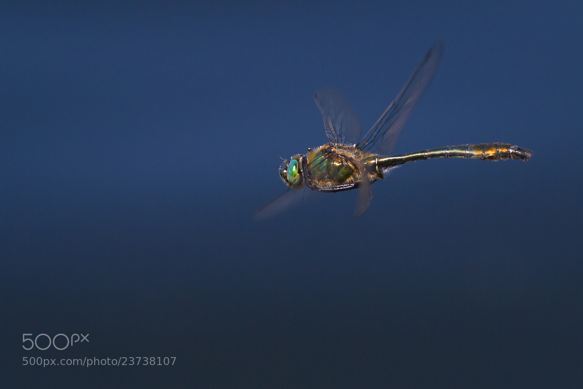 Photograph Downy Emerald III. by Martin Černý on 500px