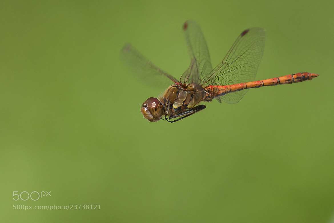 Photograph Common Darter by Martin Černý on 500px
