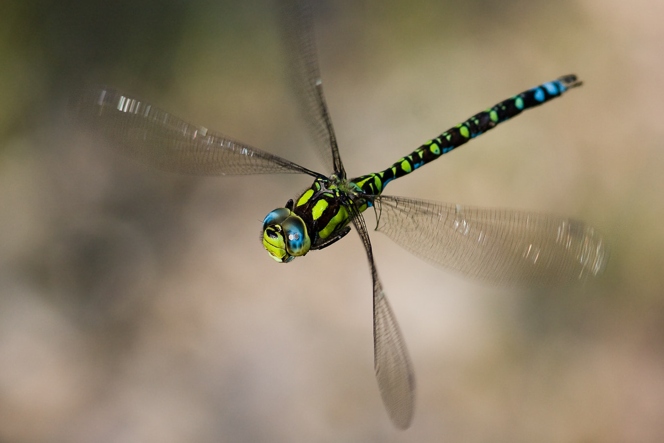 Photograph Southern Hawker II by Martin Černý on 500px