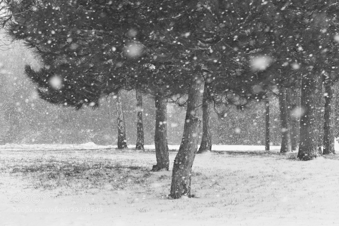 Photograph Snow fall by Karl Batchelor on 500px