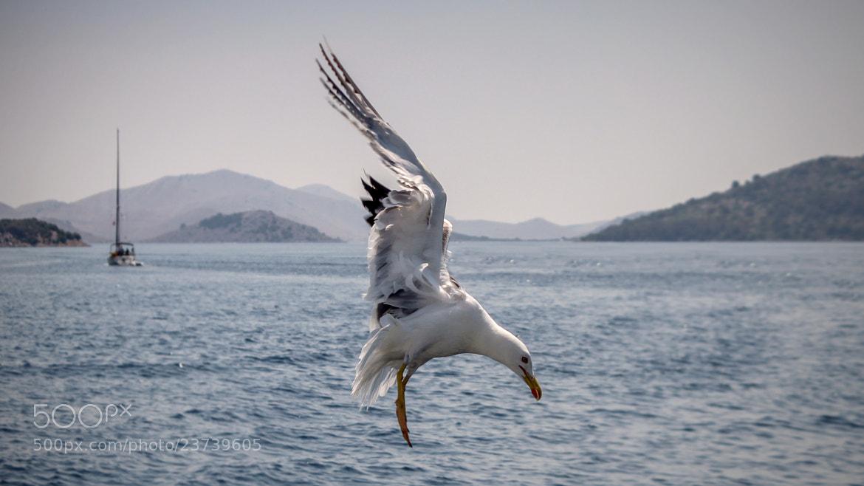 Photograph Seagull by Marcin Brygała on 500px