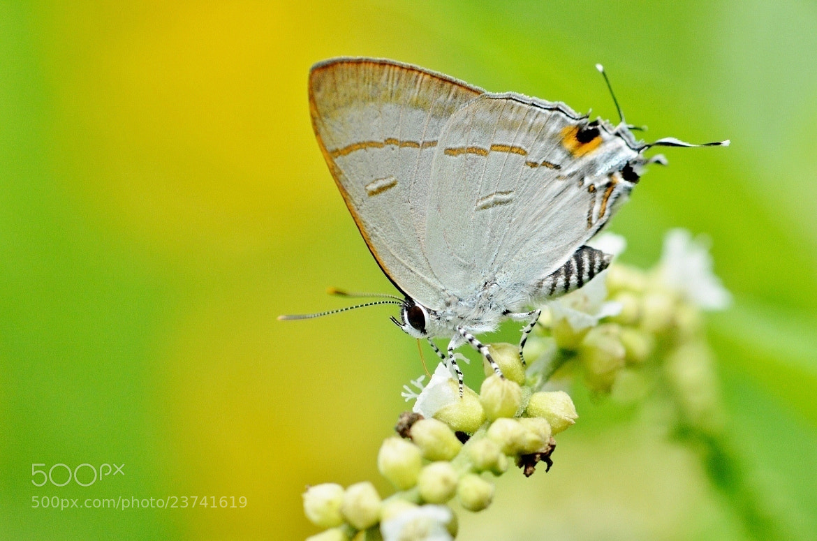 Photograph Pea Blue Macro by Terence Kok on 500px