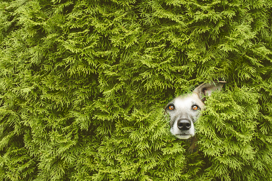 HedgeTroll by Elke Vogelsang on 500px.com