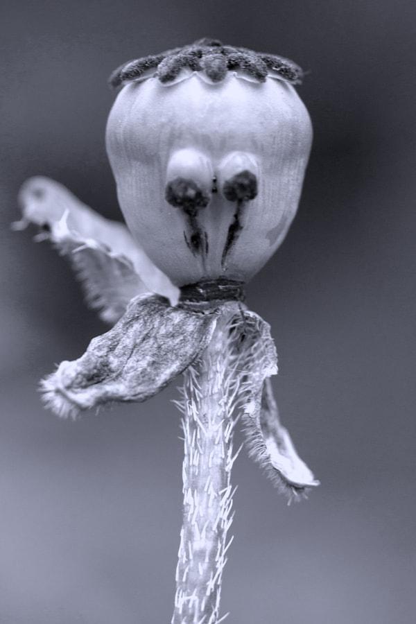 Le bonhomme triste (Sad face) de Christine Druesne sur 500px.com