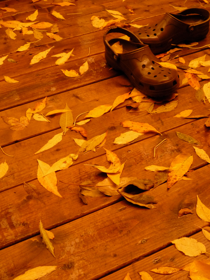Photograph Autumn leaves by Olivier Piquer on 500px
