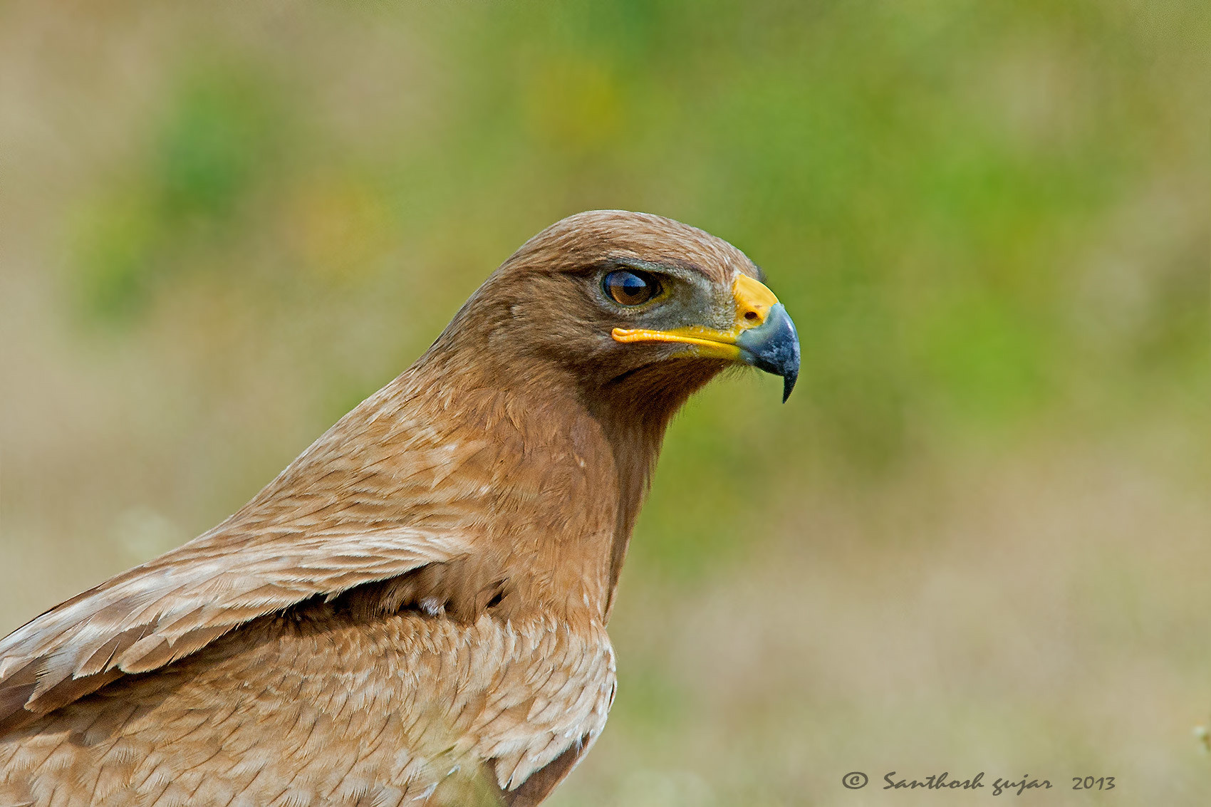 Photograph Up close-- Tawny Eagle by Santhosh Gujar on 500px