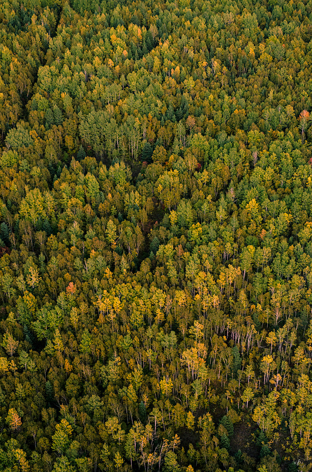 Photograph Forest by Frédéric Vanmeerbeeck on 500px