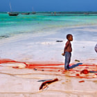 Постер, плакат: Children catching a shark Zanzibar Indian Ocean Africa 2009 © Nora de Angelli www noraphotos co