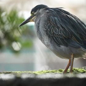 Photograph greyBird by Lukas Bachschwell