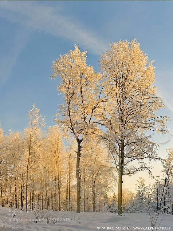 Photograph Snow at sunrise by Mirko Sotgiu on 500px