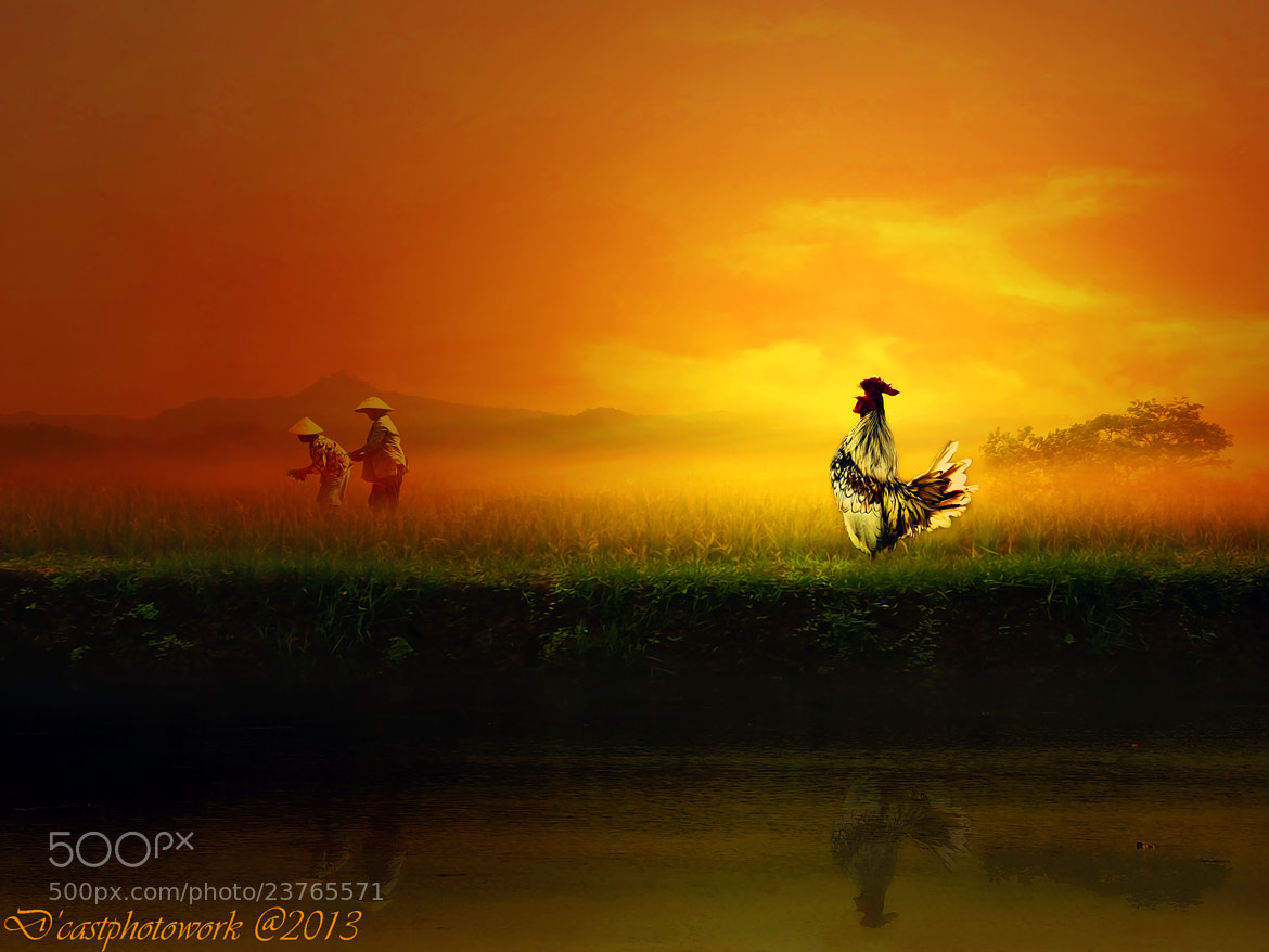Photograph Morning Song by D'cast Photowork on 500px