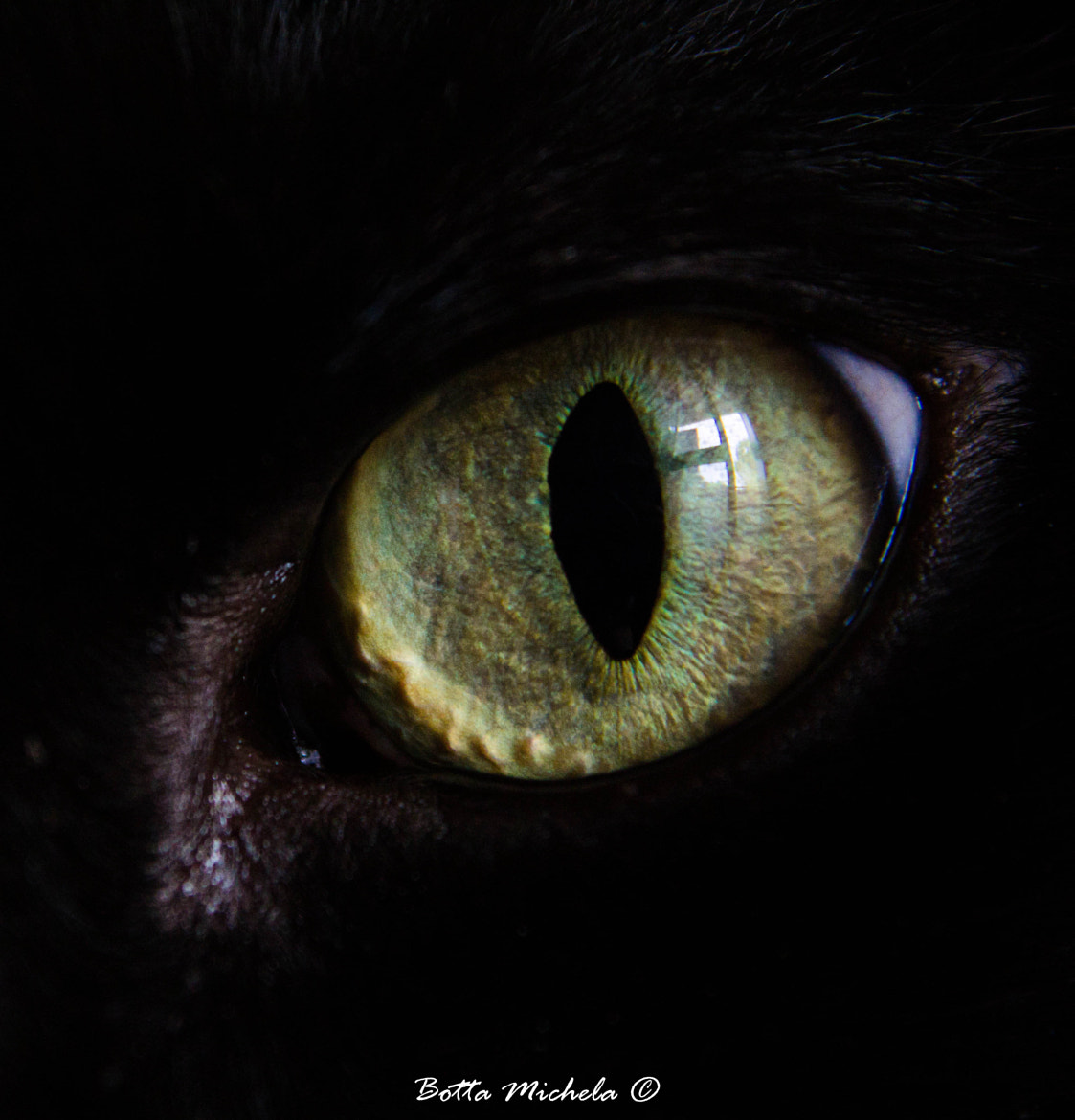 Photograph Eye cat by Michela Botta on 500px