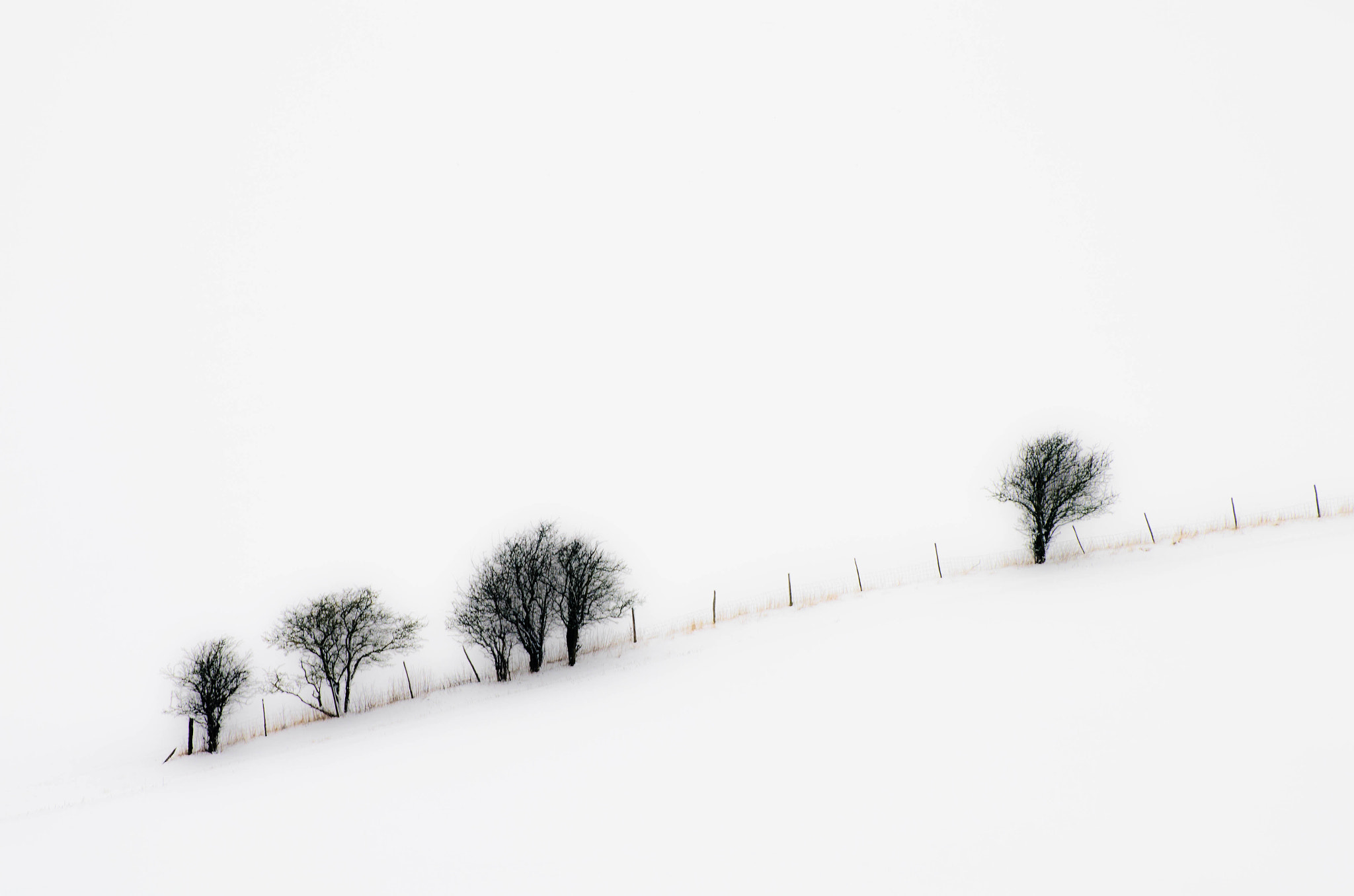 Photograph Winter Trees by Pawel Niktos on 500px