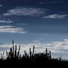 Cactus at sunset in Bonaire.
