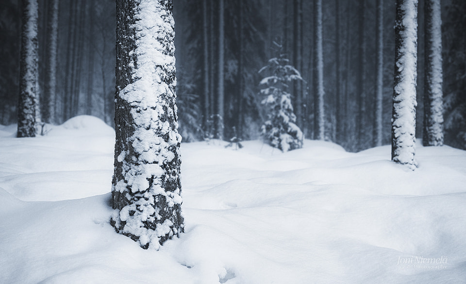 Photograph Snow Covered Trees by Joni Niemelä on 500px