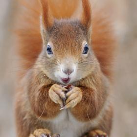 Cuter than Cute by Josef Gelernter on 500px.com