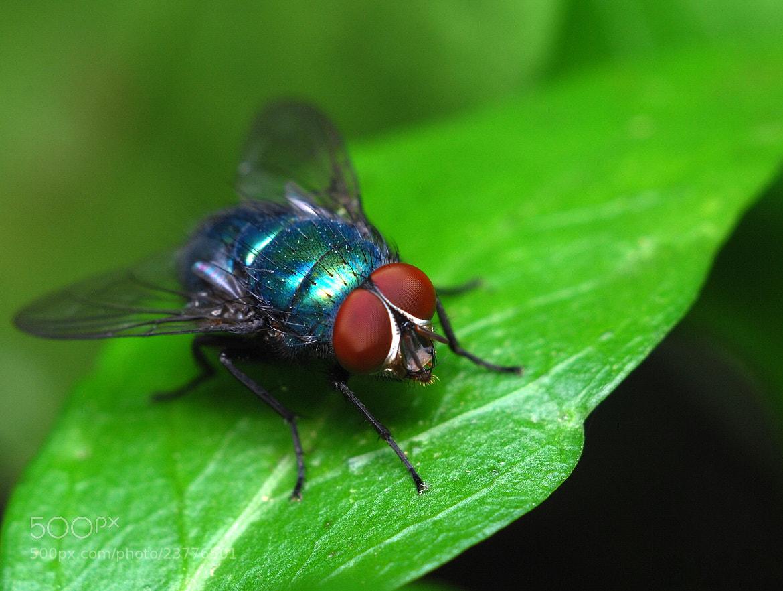 Photograph Fly by Luís Curado on 500px