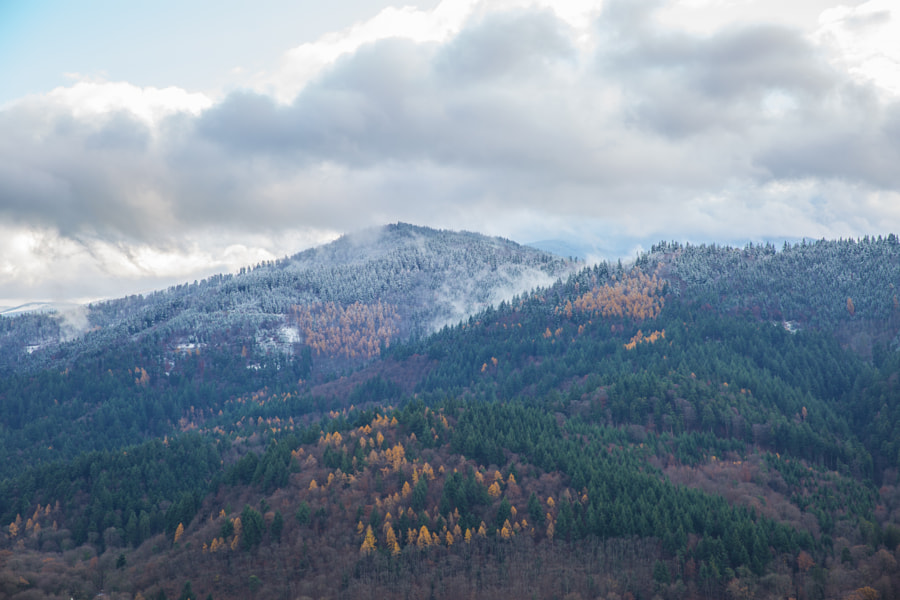 Winter approaching Black Forest (Germany)