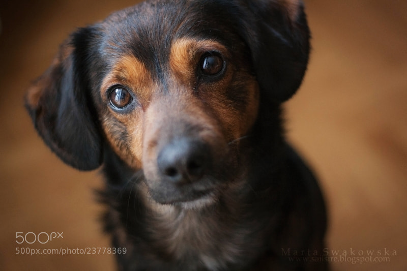 Photograph Cute dog by Marta Swakowska on 500px