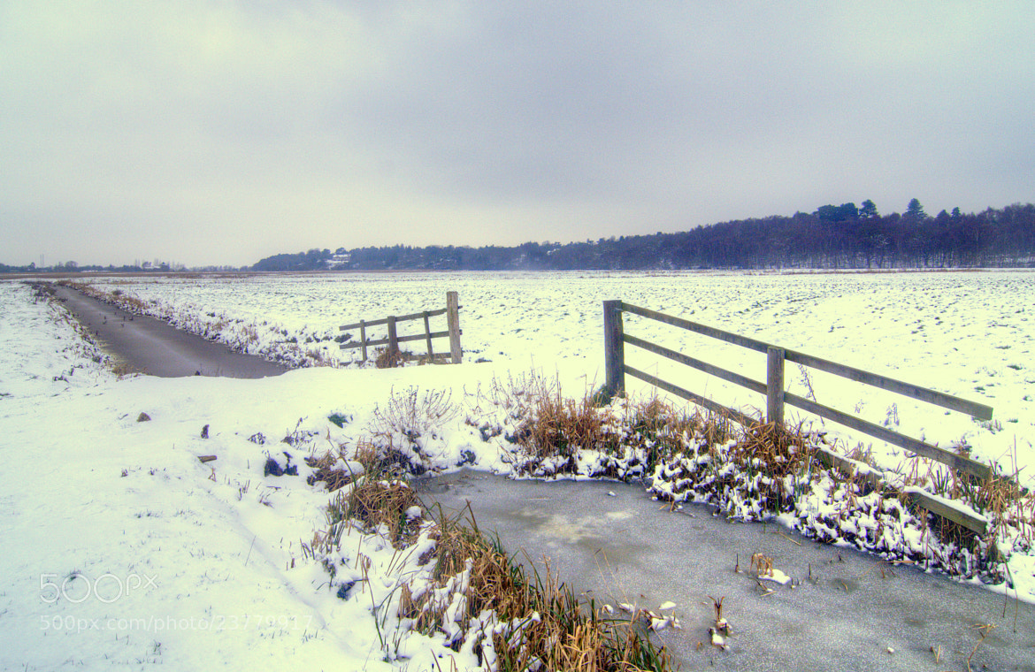 Photograph Snowy marshes by Mike Baker on 500px