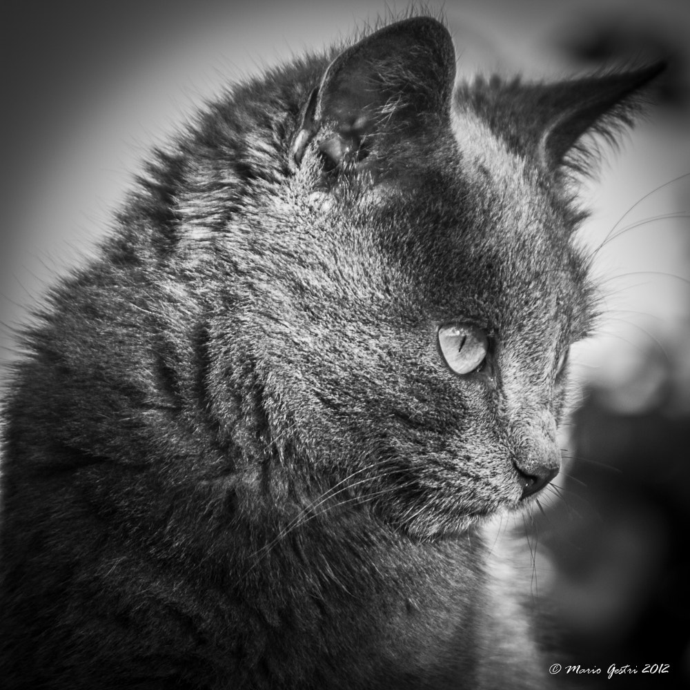 Photograph wildcat by Mario Gestri on 500px