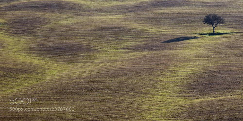 Photograph Solitudes by Davide Bonaccorso on 500px