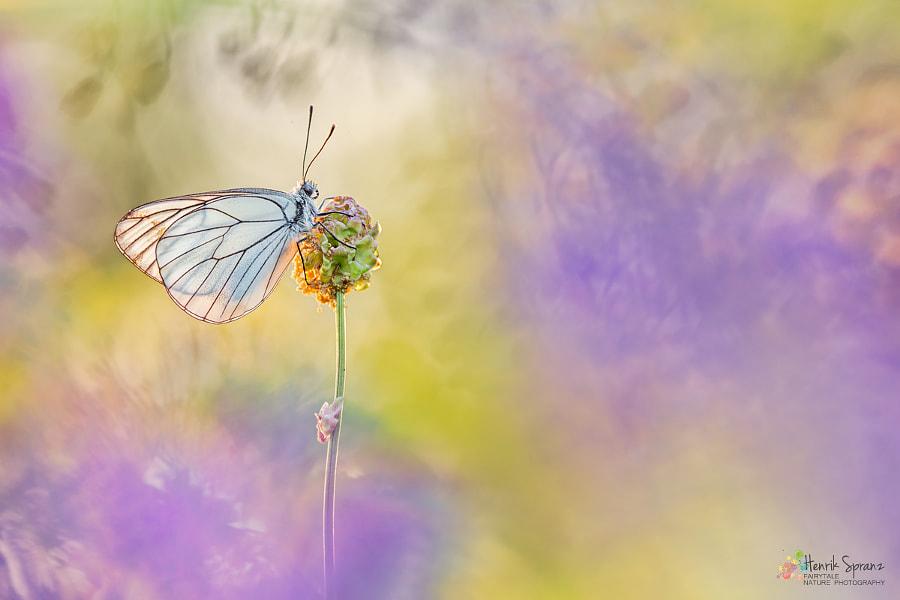 ~ Paper Kite ~