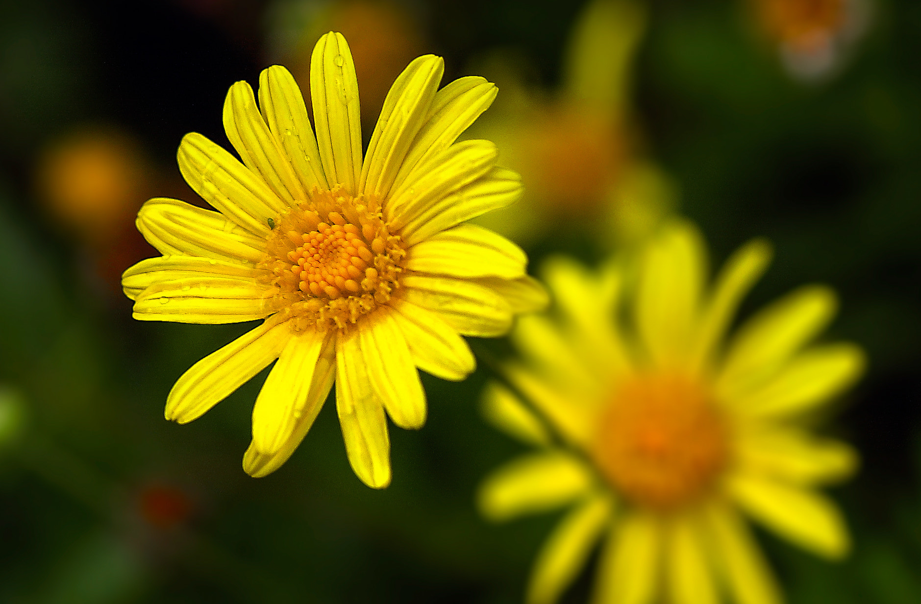 Photograph Yellow Flowers by George Bloise on 500px
