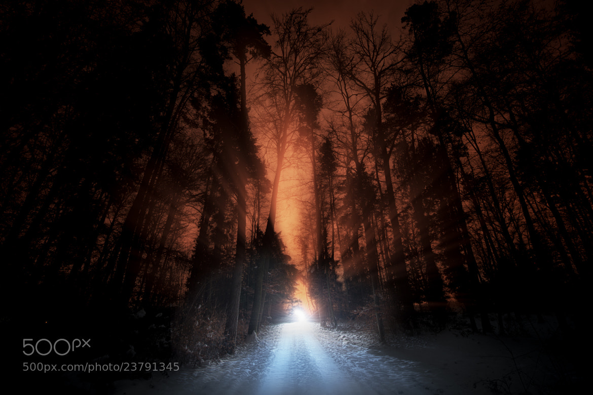 Photograph The road in the woods by John Wilhelm on 500px