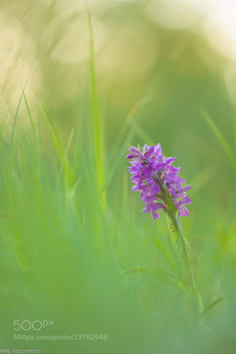 Photograph { orchid. } by Philip Koppenhöfer on 500px