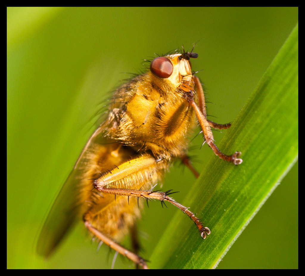 Photograph Dung Fly by Brendan Keogh on 500px
