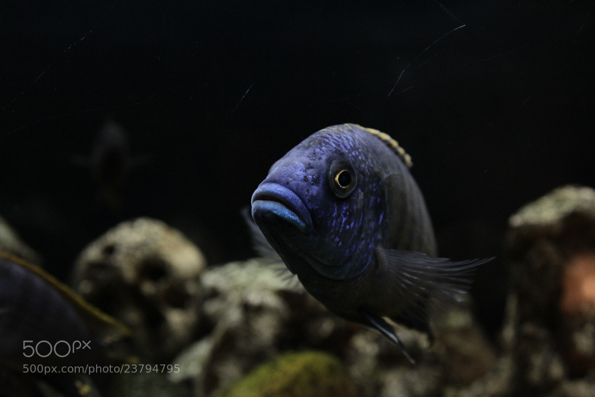 Photograph Blue Fish by Clémence Chataigner on 500px