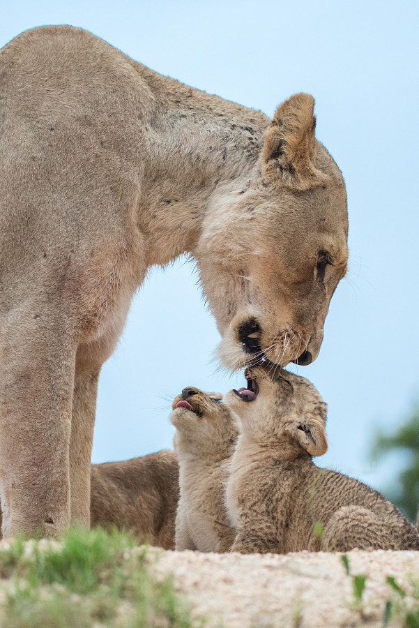 Milk Mom! Now! by Rudi Hulshof on 500px.com